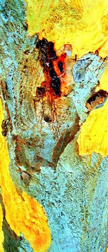 Yellow Tree - Australia
